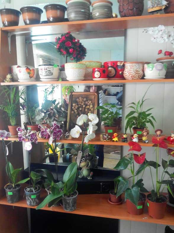 Оптом макеевка, магазины цветов в г. уфа, орхидеи